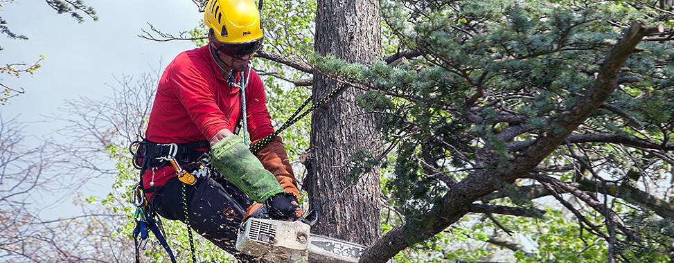 Зрізання та видалення дерев. Одеса.